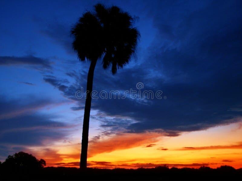 Download Florida sunset stock photo. Image of palm, shadows, sunrises - 1124110
