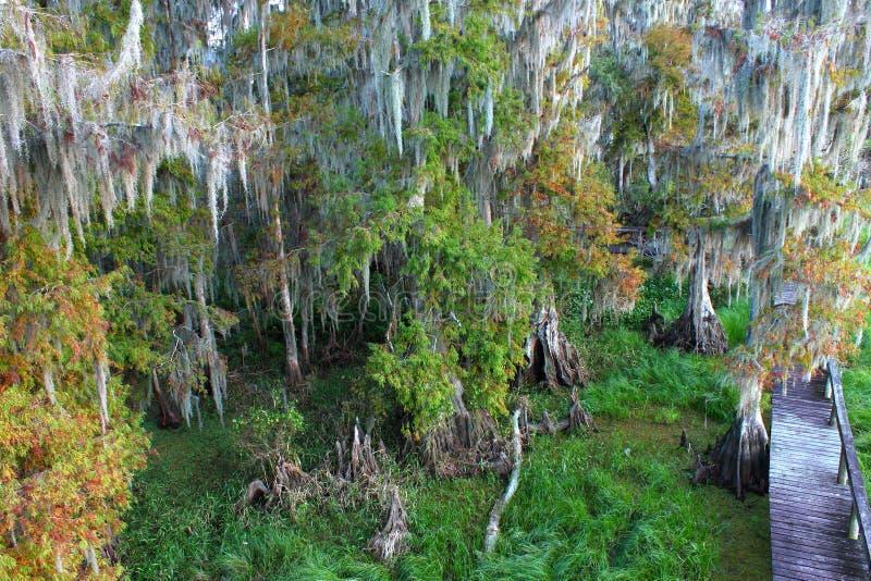 Florida Swamp royalty free stock photos