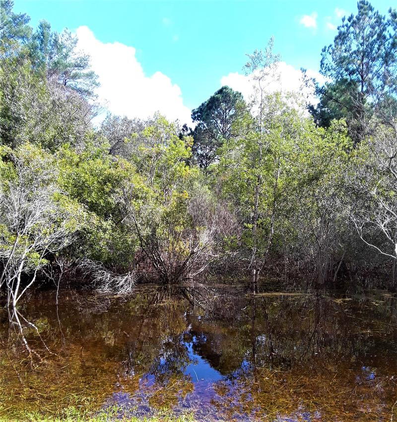 Florida Swamp Land stock photography