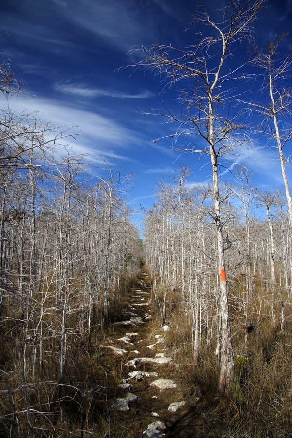 florida trail royaltyfri foto