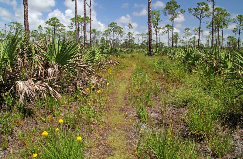 Florida Trail Royalty Free Stock Image