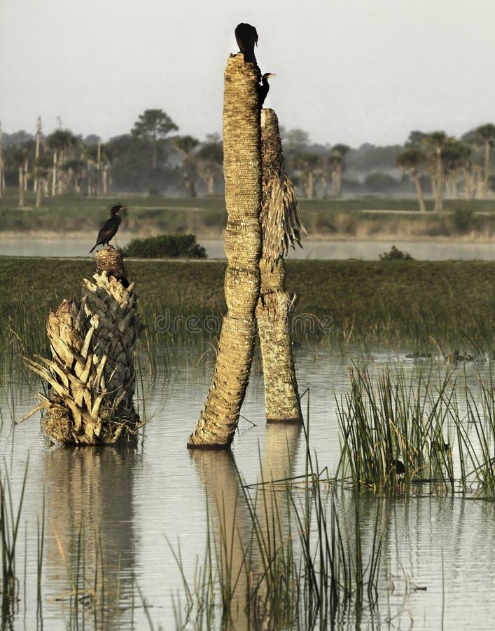 florida våtmarker royaltyfri bild