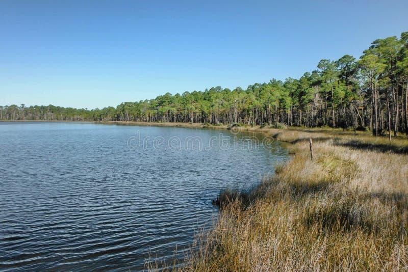 Florida våtmarker royaltyfria bilder