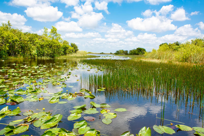 Florida wetland, Airboat ride at Everglades National Park in USA. Popular place for tourists, wild nature and animals royalty free stock photo
