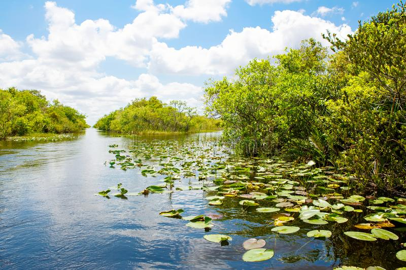 Florida wetland, Airboat ride at Everglades National Park in USA. Popular place for tourists, wild nature and animals royalty free stock image