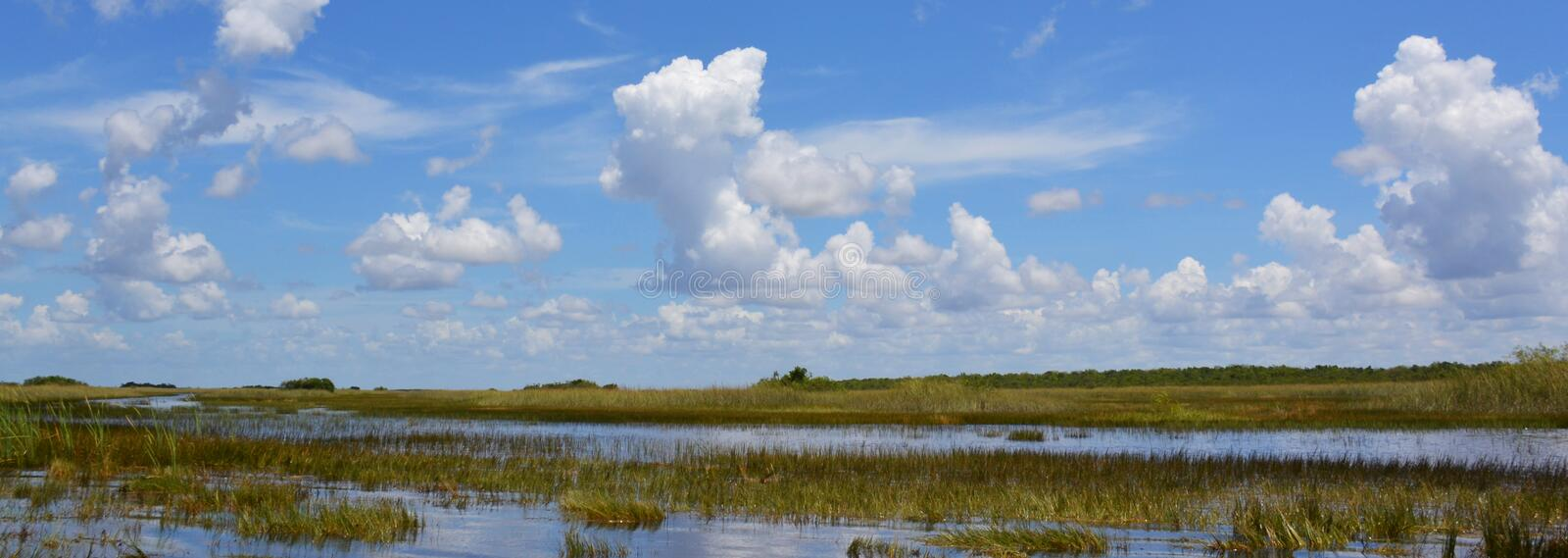 Florida wetland. Everglades National Park in Florida, USA. Florida wetland at summer. Everglades National Park in Florida state, USA stock photos
