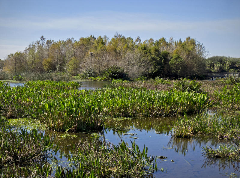 Florida Wetlands royalty free stock images