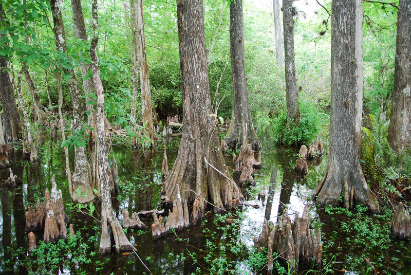 Floridas Sumpf lizenzfreie stockfotos