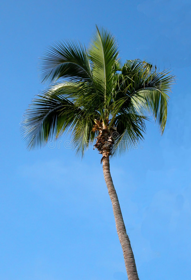 Floride Dłoni Obrazy Stock