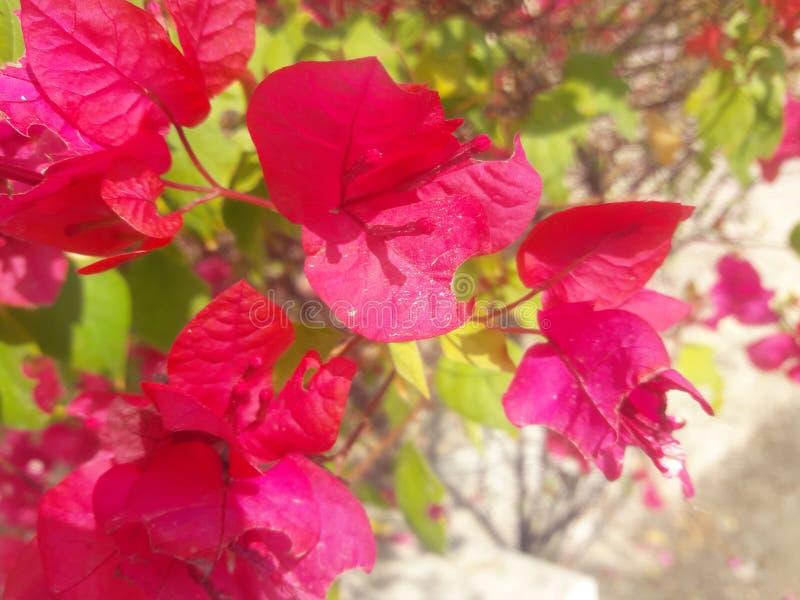 florido estación foto de archivo