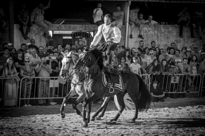 Florin Harabor riding two horses at the same time standing on them in a horse fair in Lugo, Spain, August 2016 royalty free stock photography