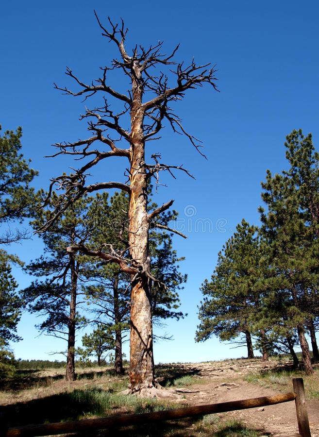Florissant Fossil Beds royalty free stock image