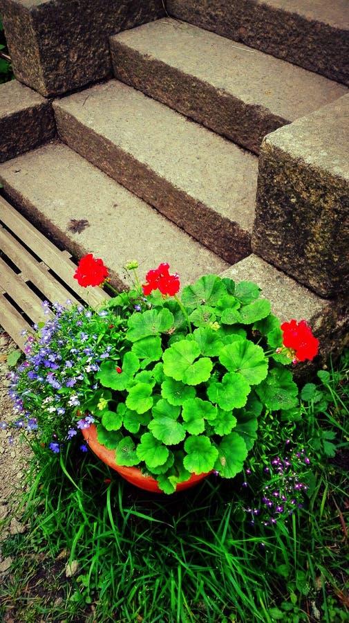 florist imagem de stock royalty free
