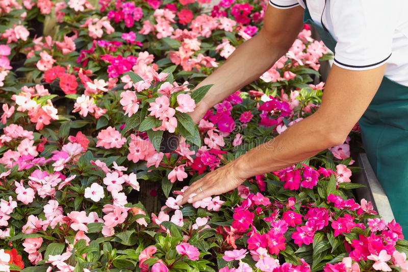 florist στοκ εικόνες