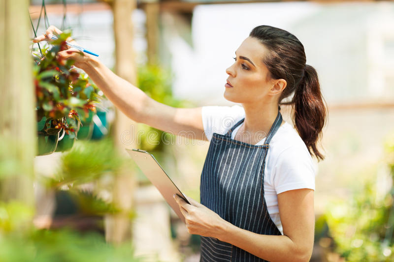 Florist Checking Flowers Royalty Free Stock Photography