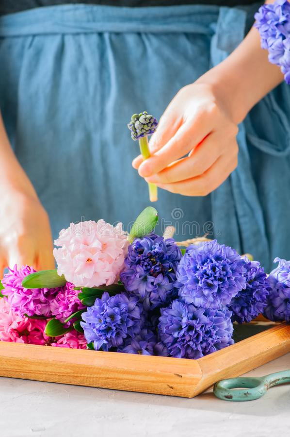 Florist girl gathering bouquet of hyacinth flowers. Flower s royalty free stock images