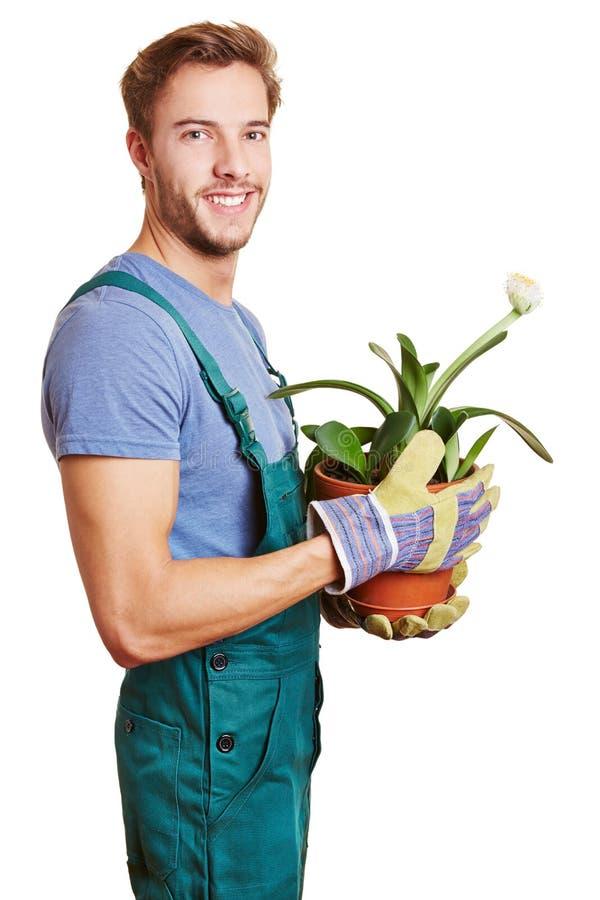 Florist with paintbrush plant. Happy florist holding a paintbrush plant (Haemanthus albiflos stock image