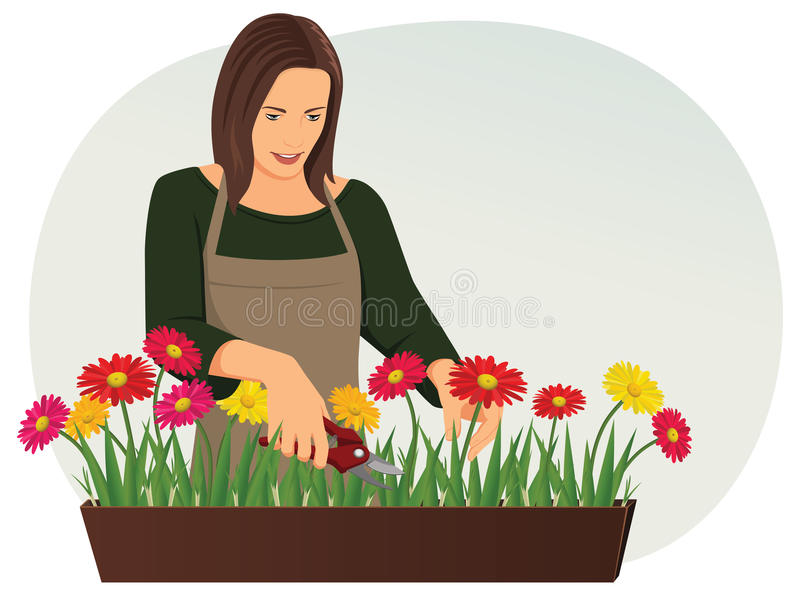 Florist. Professional florist is trimming flowers with pruning shears. Flower shop royalty free illustration