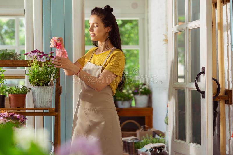 Florist sprinkling with water plants outside her shop. Caring of every one. Concentrated florist sprinkling with water plants on the shelve stand outside her royalty free stock images