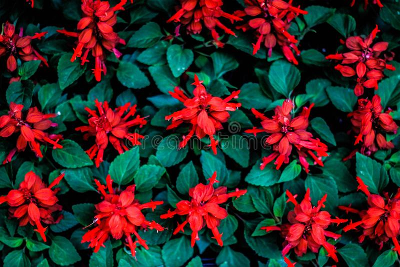 Florista стоковое изображение rf