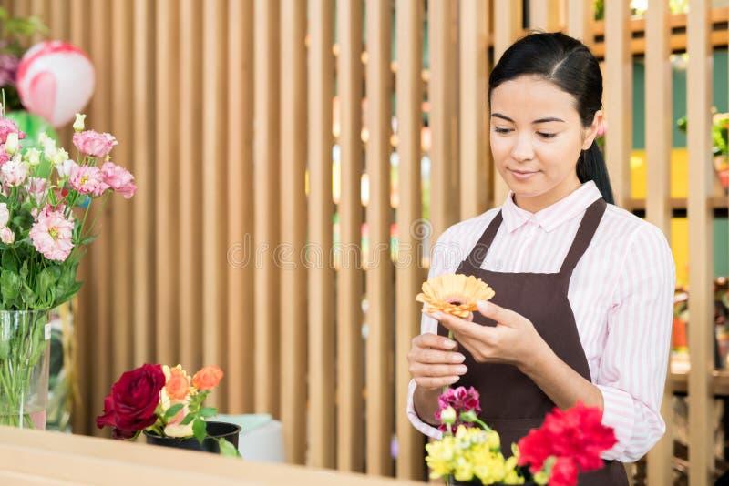 Florista com margarida foto de stock