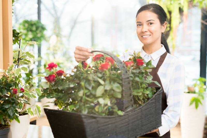 Florista com rosas foto de stock royalty free