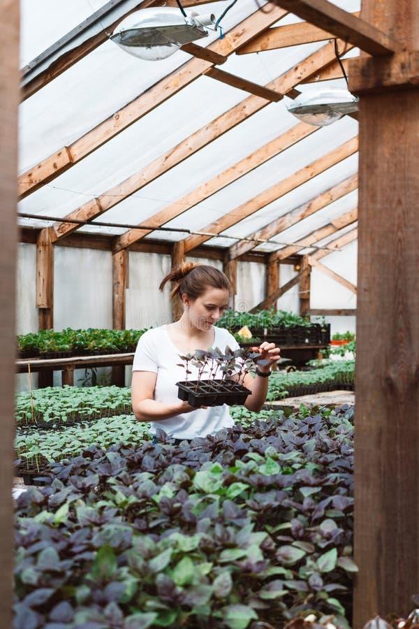 Florista de la mujer que trabaja en jard?n fotografía de archivo libre de regalías