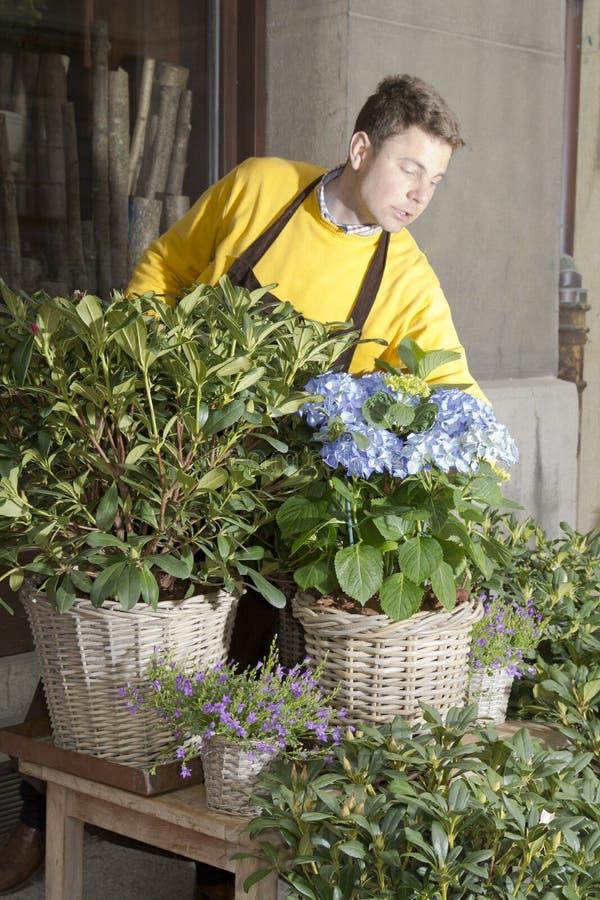 Florista que arranja flores frescas fotografia de stock royalty free