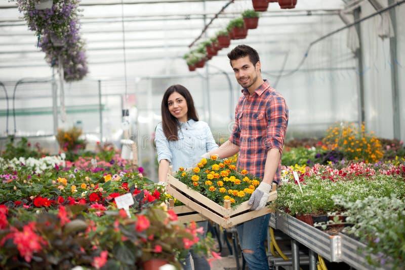 Floristas de sorriso novos dos povos que trabalham no jardim imagens de stock royalty free