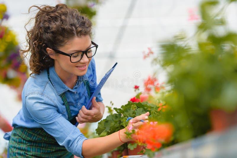 Floristenfrau, die mit Blumen in einem Gewächshaus arbeitet lizenzfreie stockfotos