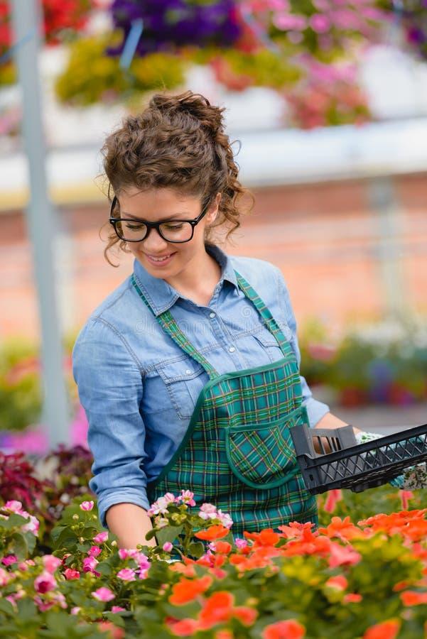 Floristenfrau, die mit Blumen in einem Gewächshaus arbeitet stockfotografie