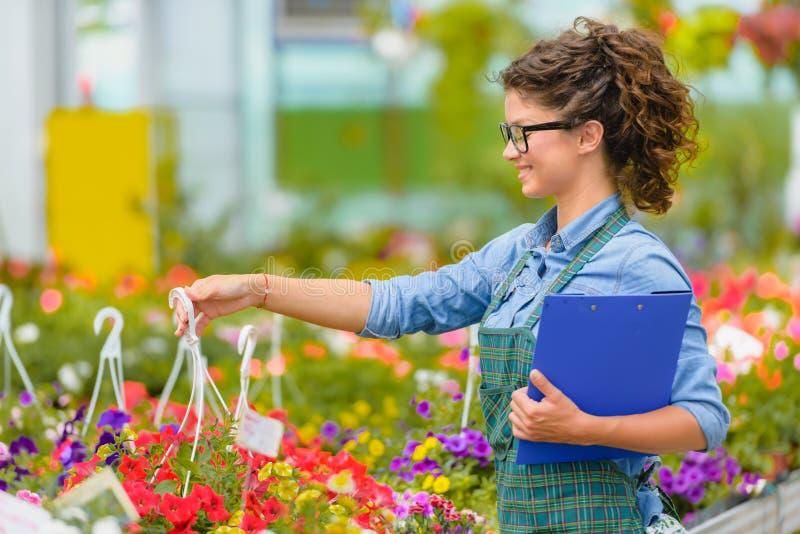 Floristenfrau, die mit Blumen in einem Gewächshaus arbeitet stockfotos