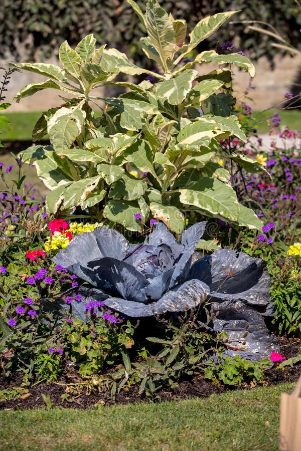 Floristic состав красной капусты и цветков в Святом Malo brittani стоковая фотография