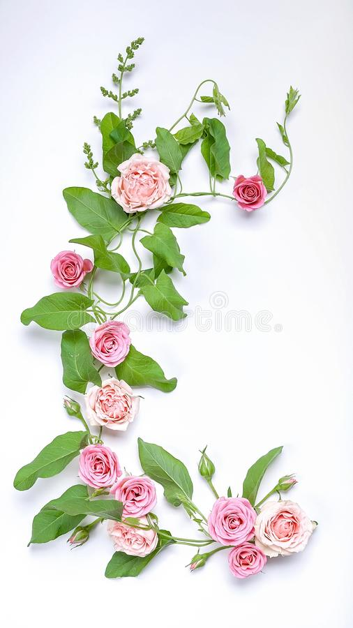 Floristic vertical wedding composition: bindweed leaves, flowers and rosebuds on a white background. Top view royalty free stock images
