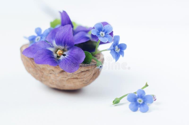 Floristische samenstelling met viooltjes en vergeet-mij-nietjebloemen in een notedop tegen mooie bokehachtergrond royalty-vrije stock fotografie