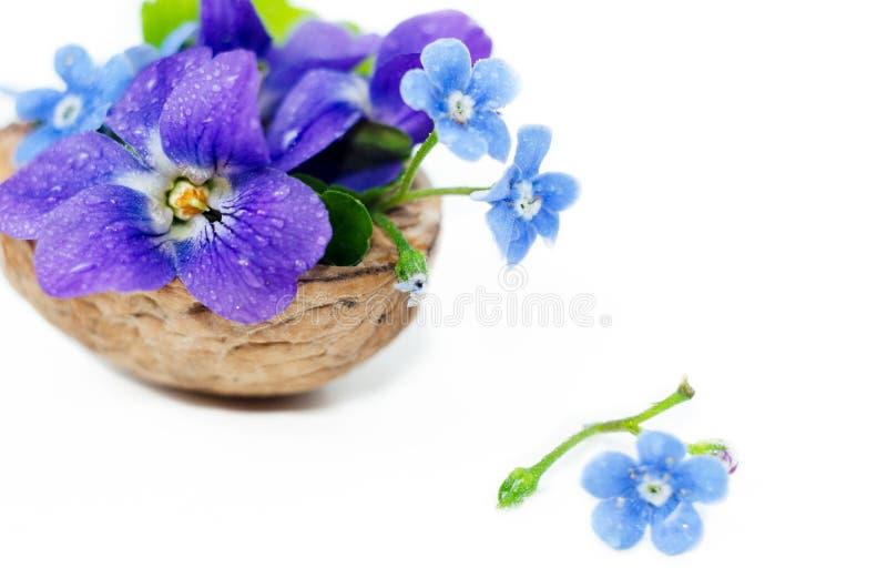 Floristische samenstelling met viooltjes en vergeet-mij-nietjebloemen in een notedop tegen mooie bokehachtergrond royalty-vrije stock foto