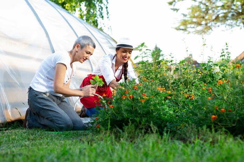Florists women working with flowers in a greenhouse stock photography