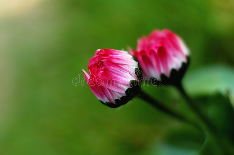 flory fotografia royalty free