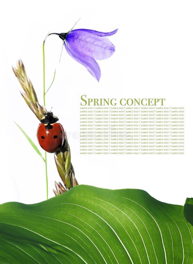 flory ladybird fotografia stock
