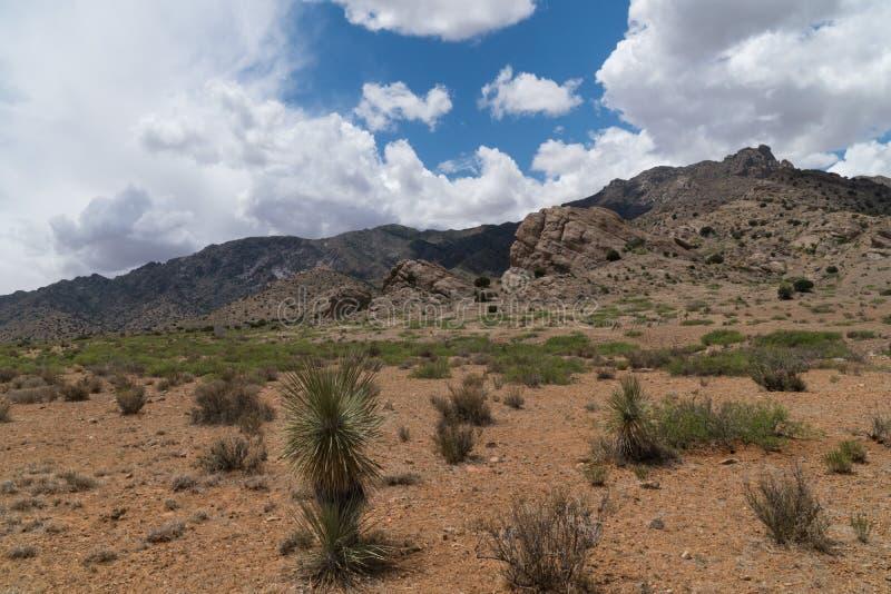 Floryda g?ry sceniczne, po?udniowo-zachodni Nowy - Mexico fotografia royalty free