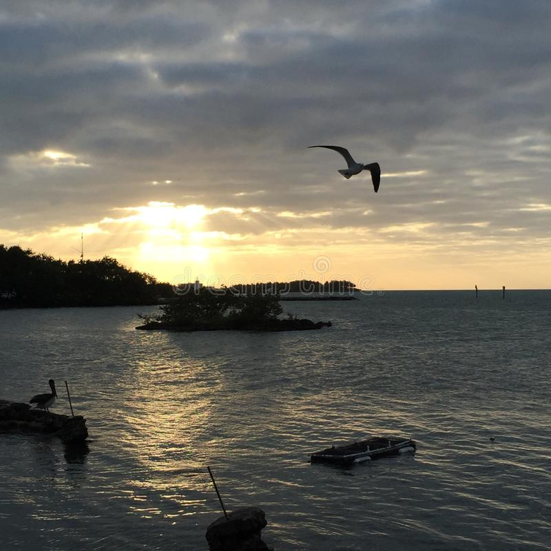 Floryda kluczy zmierzchu ptaków woda perfect zdjęcie stock