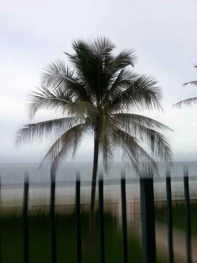 Floryda palma obraz stock
