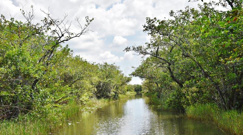 Floryda stanu usa błot gator parka przyrody rzeka obrazy royalty free