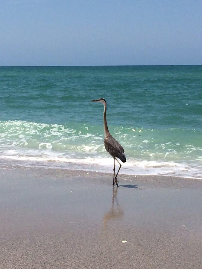 Floryda wody ptactwo obraz royalty free