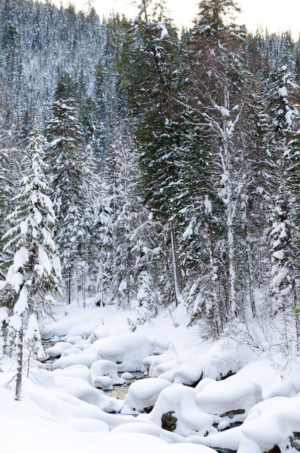 Flot de forêt de taiga de l'hiver photographie stock libre de droits