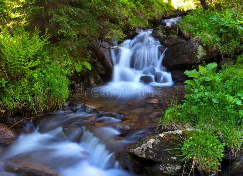 Flot de montagne dans les bois image libre de droits