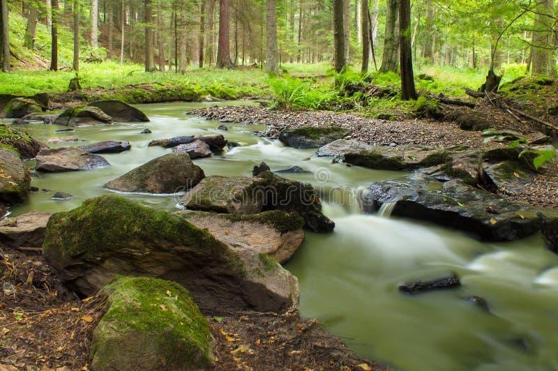 Flot de montagne dans une forêt photographie stock