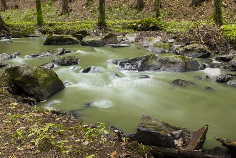 Flot de montagne dans une forêt photographie stock libre de droits