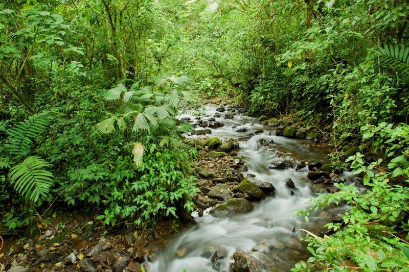 Flot par la forêt tropicale images libres de droits