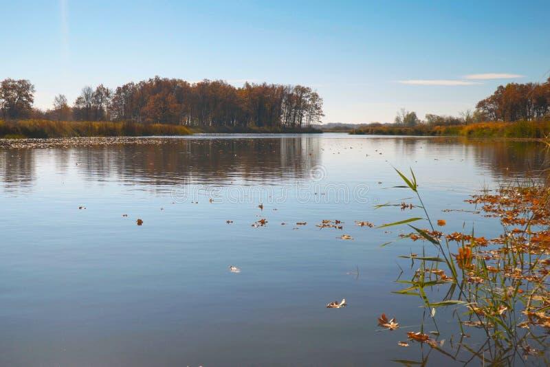 Flotador de las hojas de otoño en el agua Lago o río con agua reservada en la estación del otoño imagen de archivo